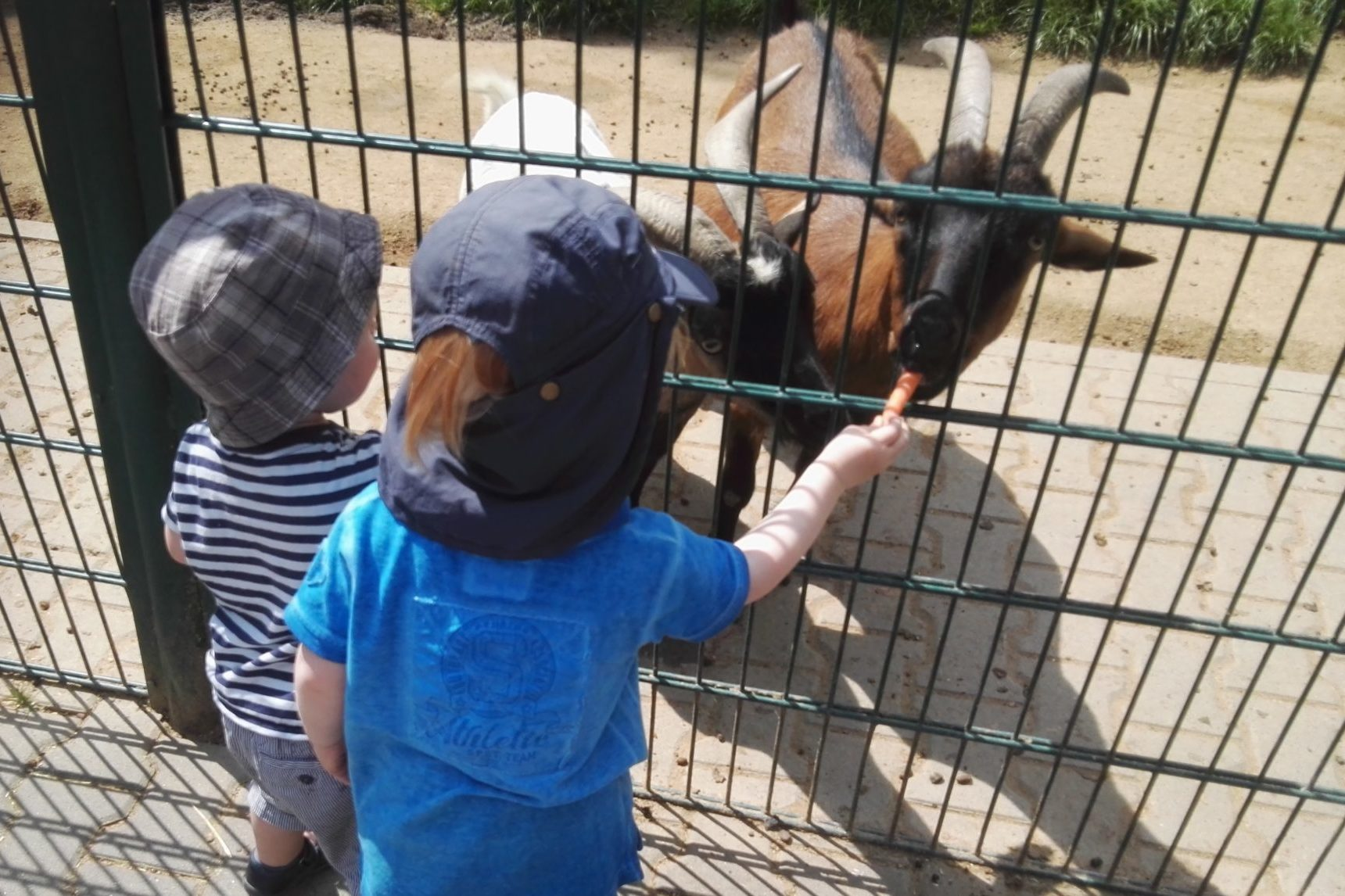 Tiere füttern Opel-Zoo Kronberg