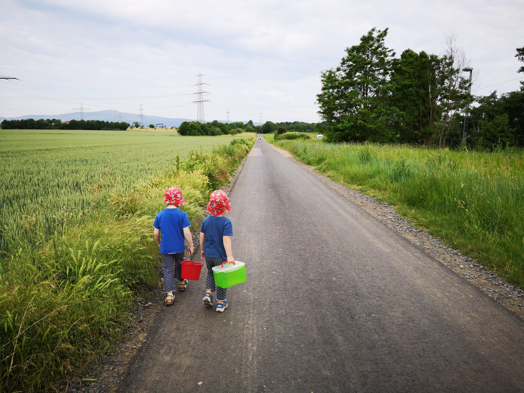 Erdbeerpflücken auf dem Erdbeerfeld in Praunheim