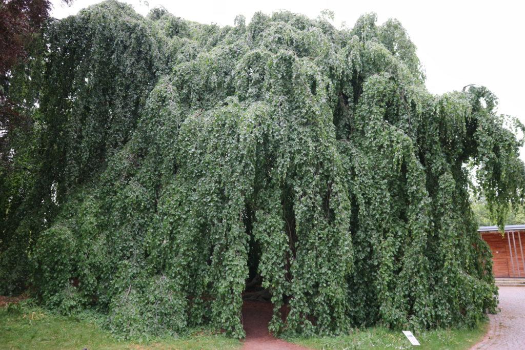 Was für eine tolle Baumhöhle, unbedingt reingehen und der Hitze entfliehen - Frankfurt mit Kids