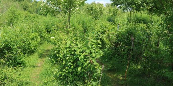 Das Weidenlabyrinth am Alten Flugplatz liegt etwas versteckt