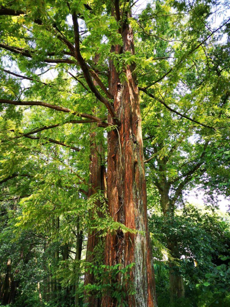 Im Kurpark stehen überall alte Bäume, die schön Schatten spenden
