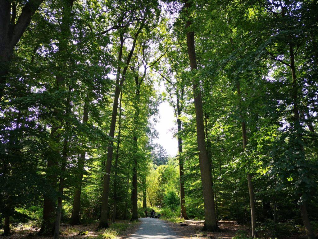 Nach ca. 200 Metern durch den Wald ist man am Eingang