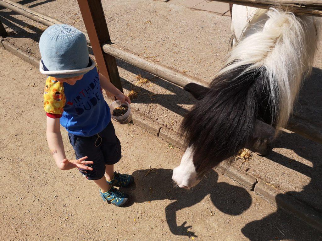 Iiiihhh, ganz schön nass die Fütterung der Ponys im Waldzoo Offenbach
