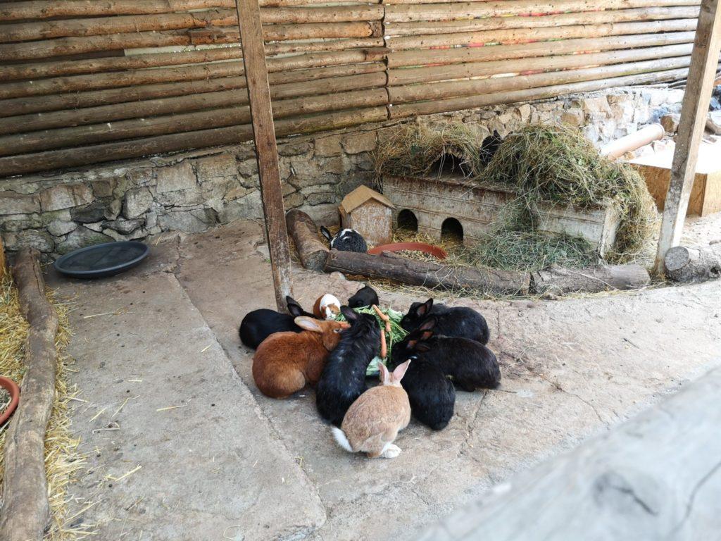 Mittags werden die Tierchen gefüttert im Waldzoo Offenbach