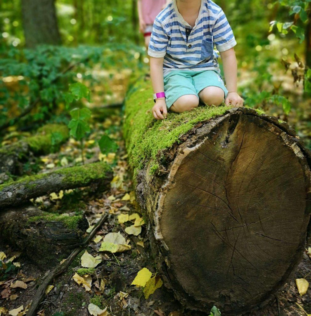 Bäume ausreißen im bioversum Jagdschloss Kranichstein - Frankfurt mit Kids