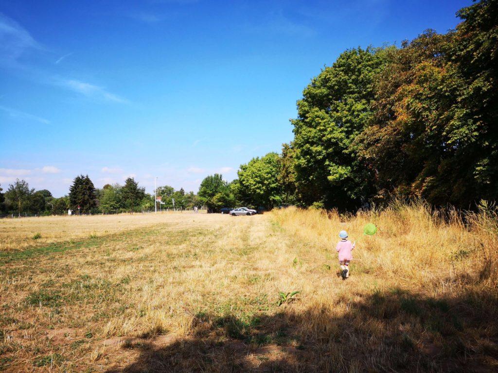 Auf Schmetterlings- und Heuschreckenjagd - Frankfurt mit Kids