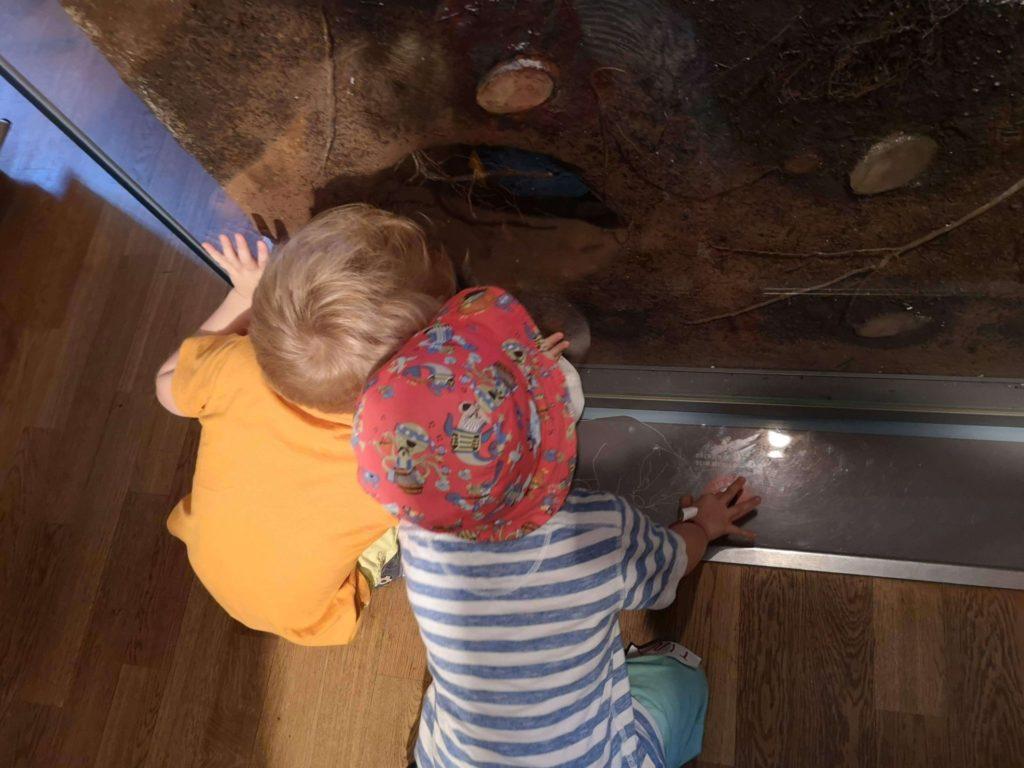Faszinierendes Walddiorama im bioversum Jagdschloss Kranichstein - Frankfurt mit Kids