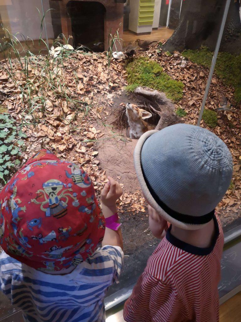 Walddiorama im bioversum Jagdschloss Kranichstein - Frankfurt mit Kids