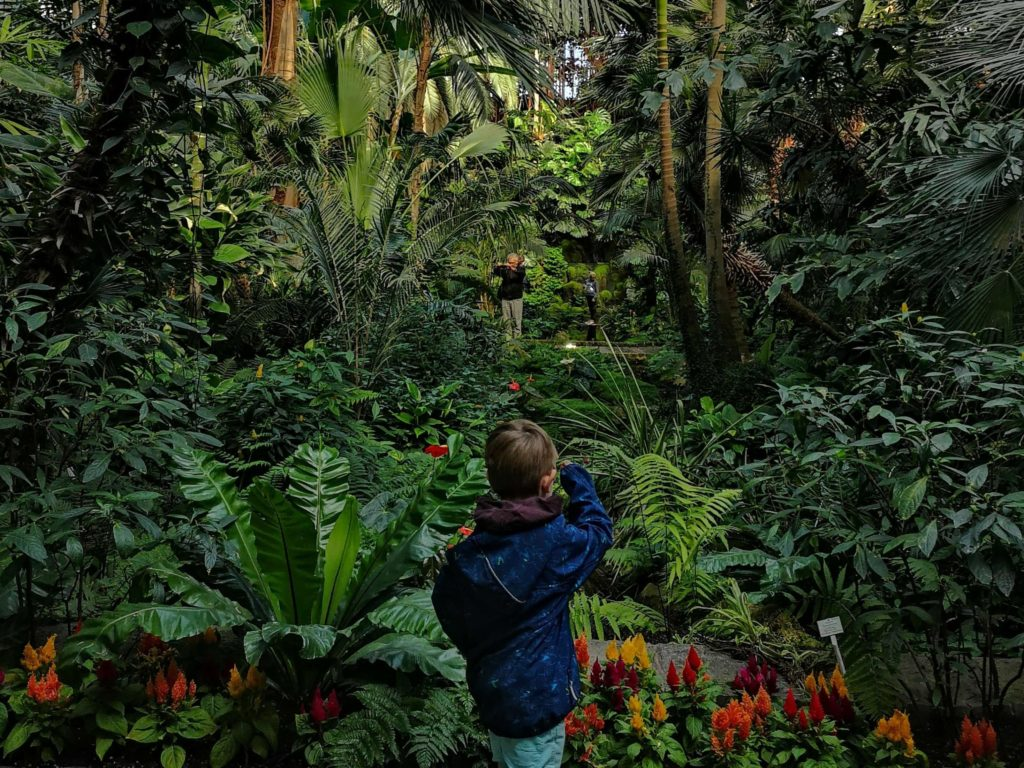 Der Dschungel im Palmenhaus - Frankfurt mit Kids