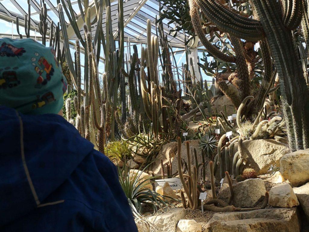 Der Kakteengarten ist faszinierend im Palmengarten Frankfurt - Frankfurt mit Kids