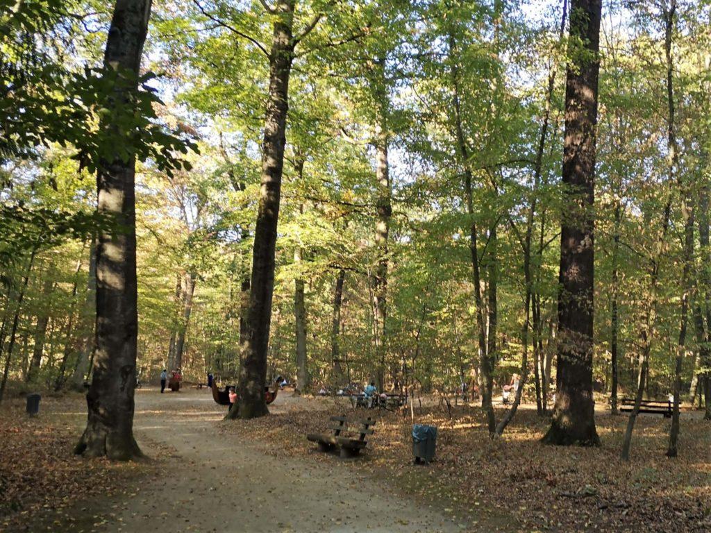 Der Spielplatz liegt schön schattig im Waldspielpark Tannenwald in Neu-Isenburg - Frankfurt mit Kids