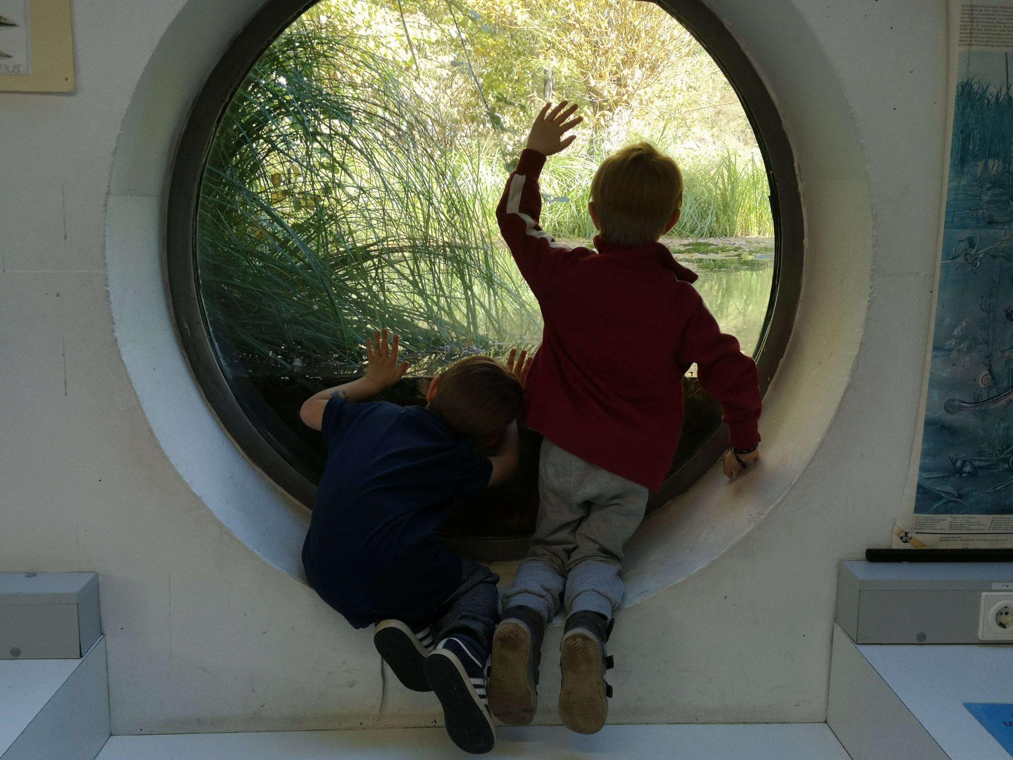 Durch das Bullauge können die Jungs den Teich und seine Bewohner sehr gut beobachten - Frankfurt mit Kids