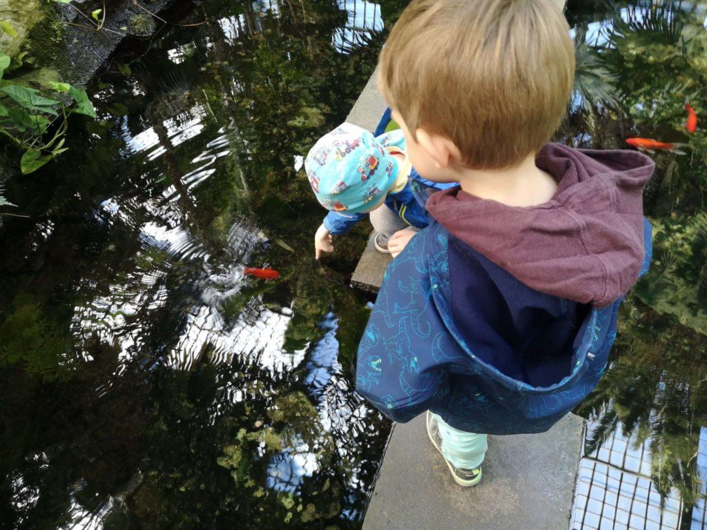 Goldfische küssen die Jungs im Palmengarten Frankfurt - Frankfurt mit Kids