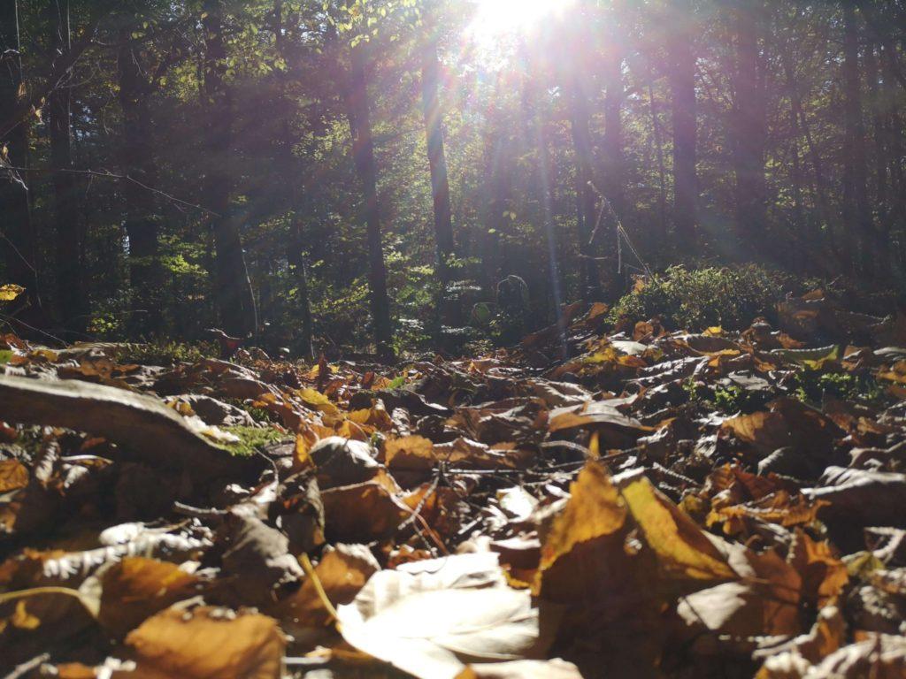 Herbst im Stadtwald - Frankfurt mit Kids