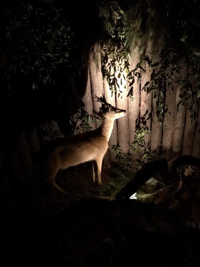 Im Dunkelraum warten einige Tiere auf die Kinder - Frankfurt mit Kids