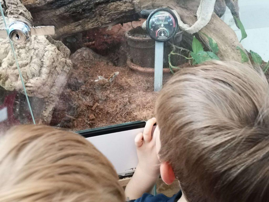 Viele lebende Tiere gibt es im StadtWaldHaus - Frankfurt mit Kids