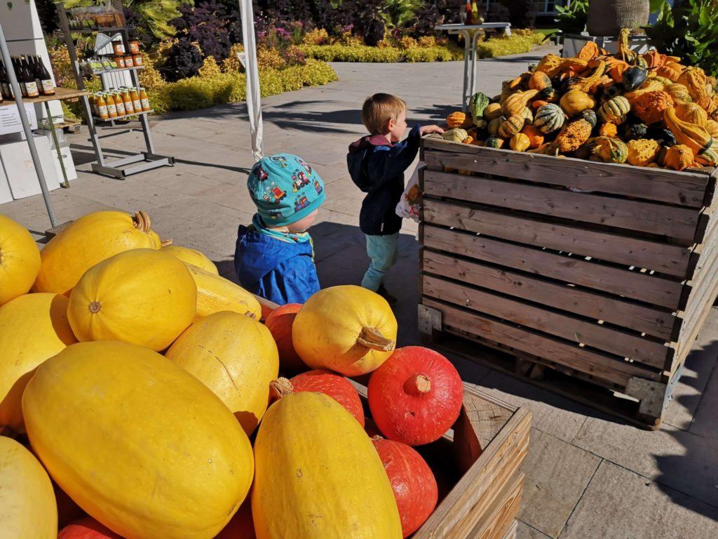 Von Hokkaido bis zu Zierkürbissen von Pauls Bauernhof im Palmengarten Frankfurt - Frankfurt mit Kids