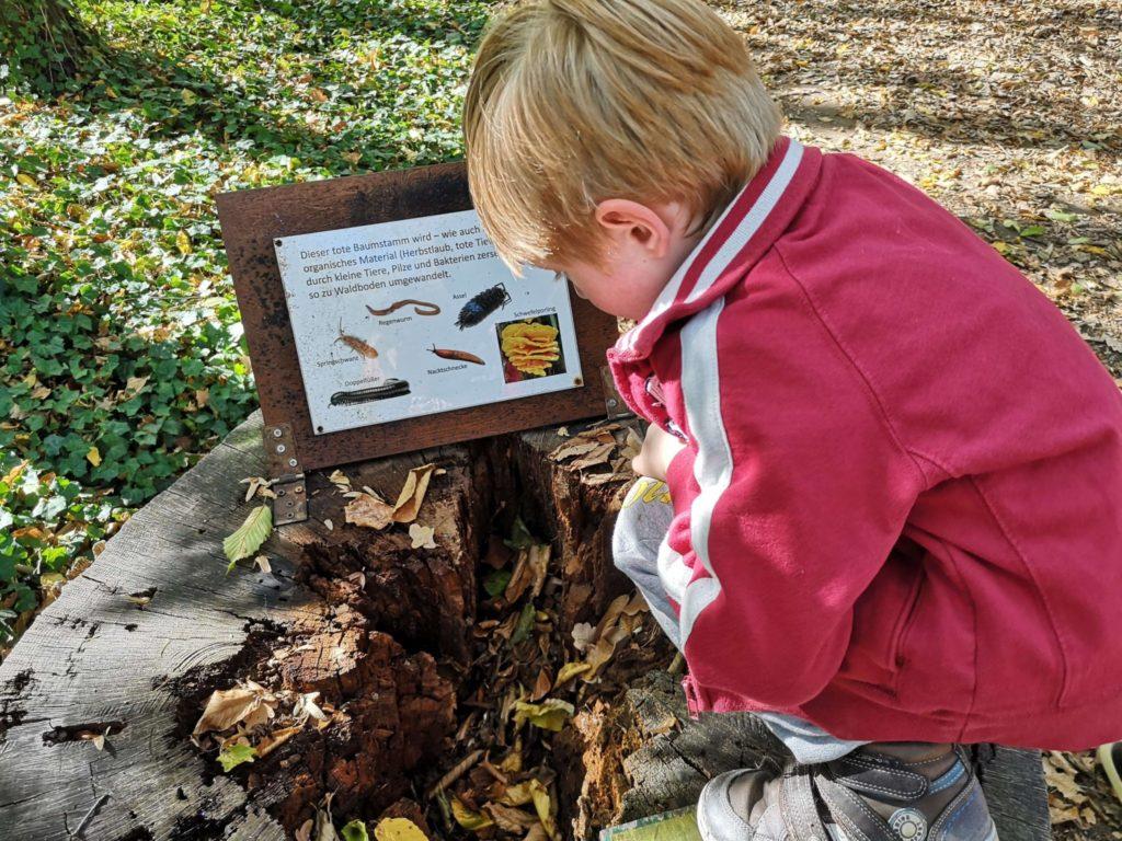Was gibt es im toten Baumstamm zu sehen - Frankfurt mit Kids
