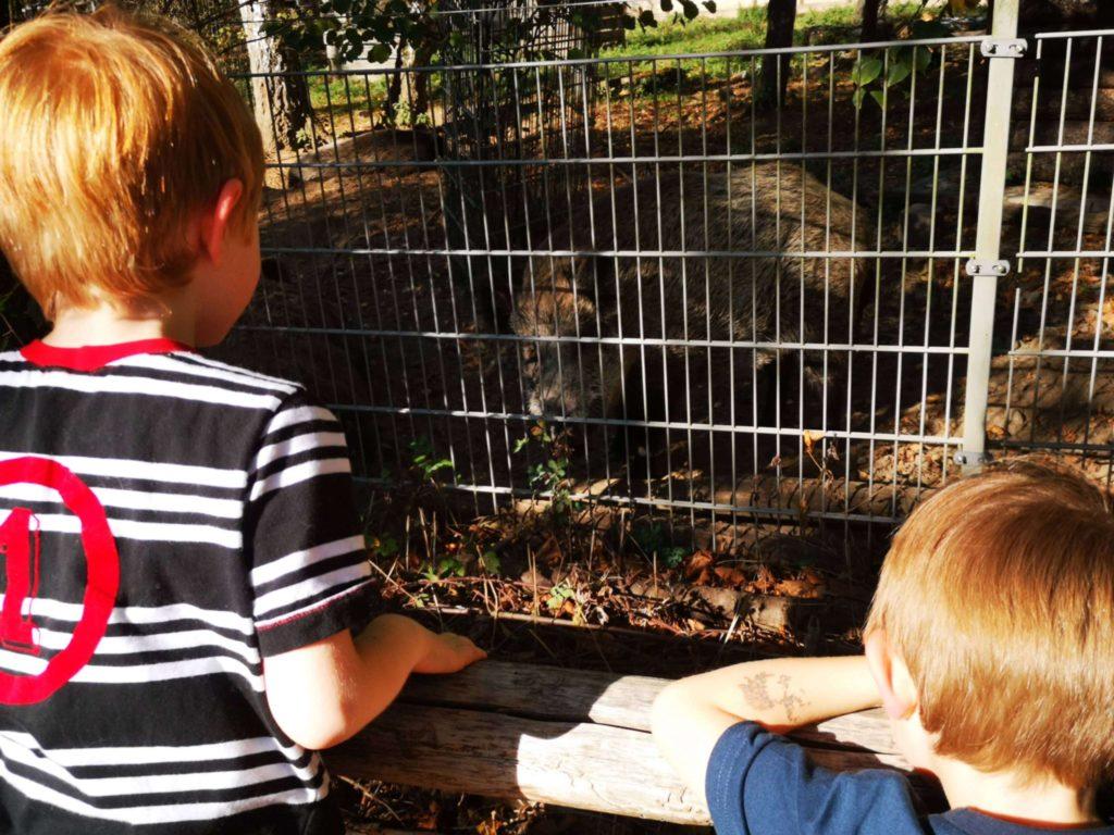 Was riecht denn hier so... Die Wildschweine stanken, aber die Jungs fanden sie dennoch klasse - Frankfurt mit Kids