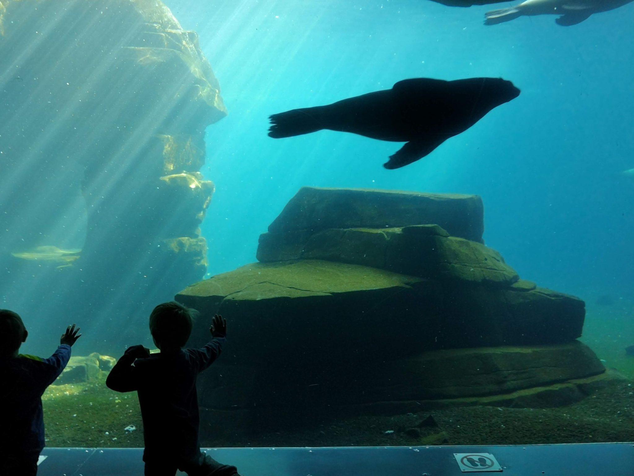 Ausflugstipp Hamburg Tierpark Hagenbeck - Frankfurt mit Kids