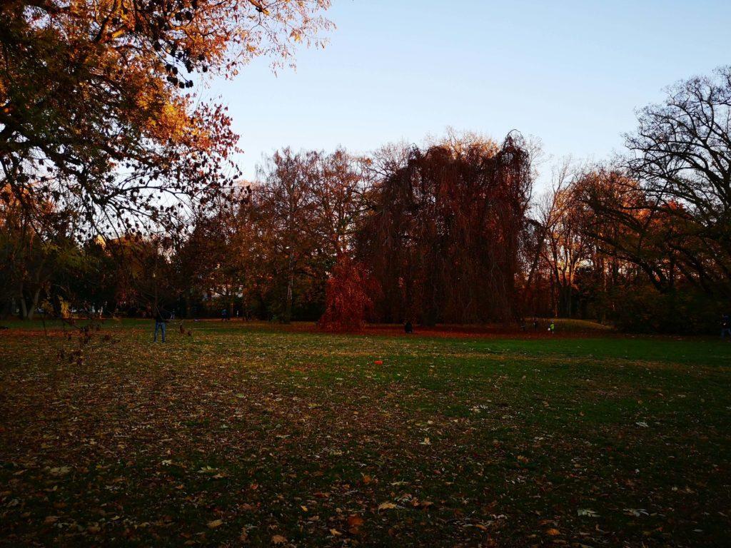 Ein Nachmittag an einem herbstlichen Novemebertag im Solmspark in Rödelheim
