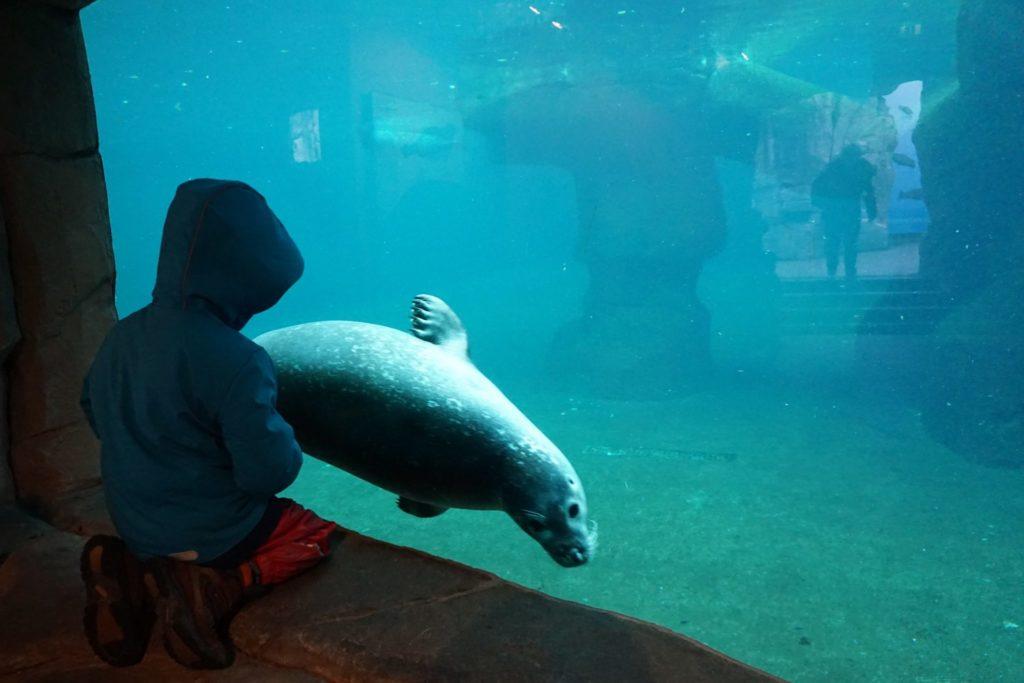 Den Tieren ganz nah im Frankfurter Zoo