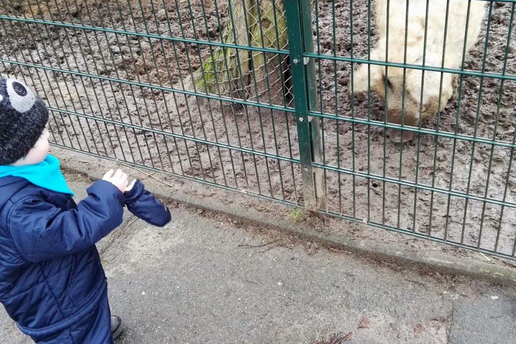 Am besten etwas Abstand halten zum seltenen Wollschwein