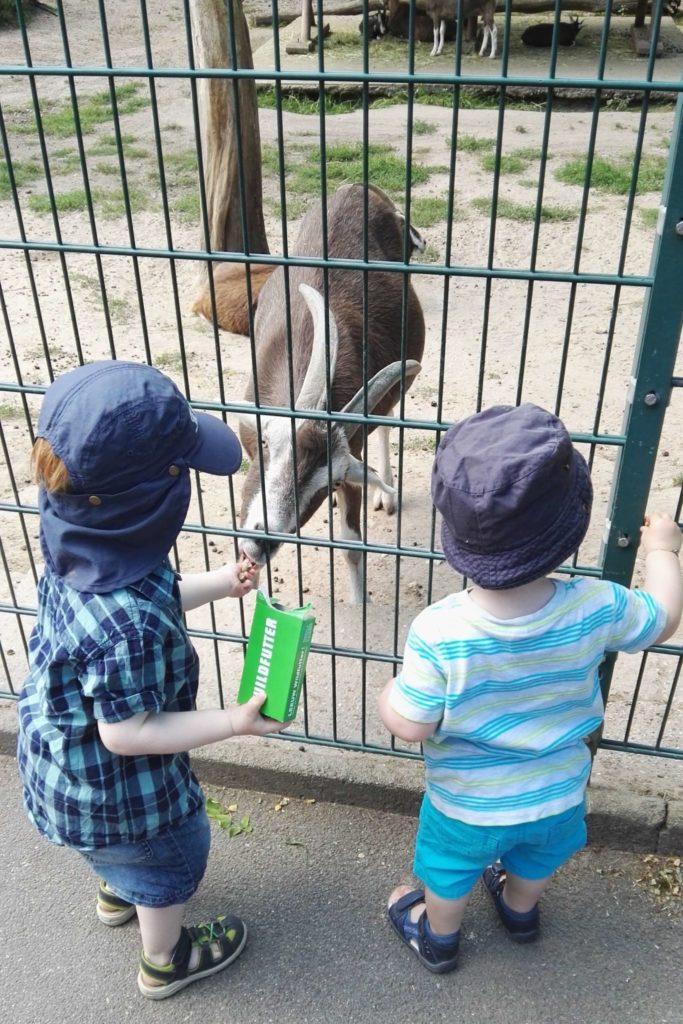 Füttern erlaubt im Wildpark Mainz-Gonsenheim