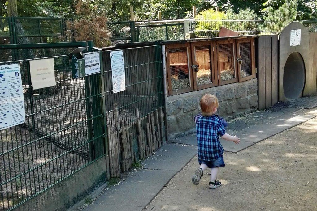 Minizoo im Wildpark Gonsenheim