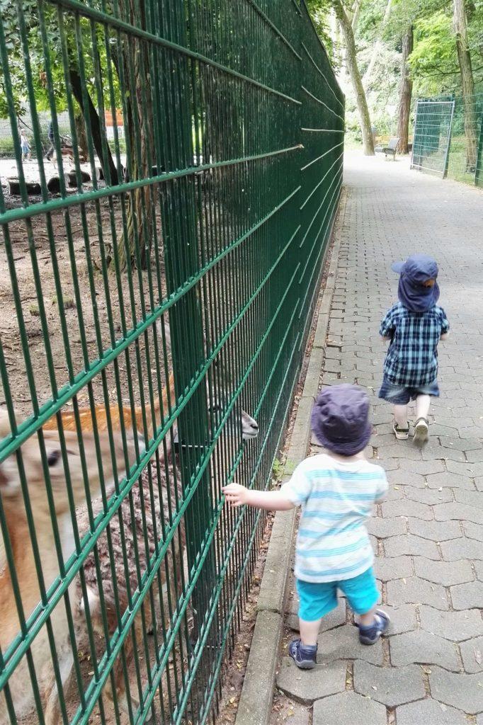 Schön schattig im Wildpark Mainz-Gonsenheim