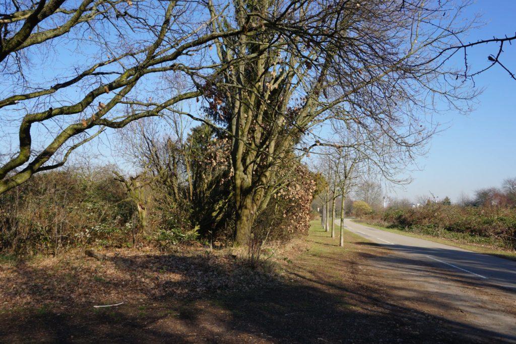 Anfahrt zur Schwanheimer Düne