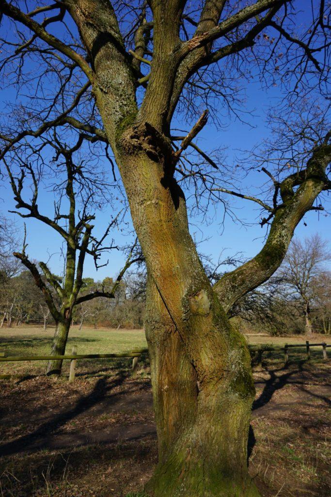 Ein sich umarmender Baum