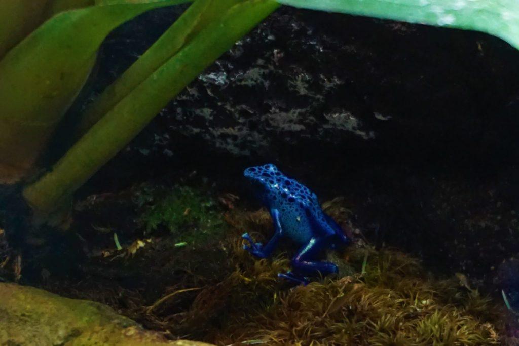 Ein blauer Frosch fasziniert die Kinder