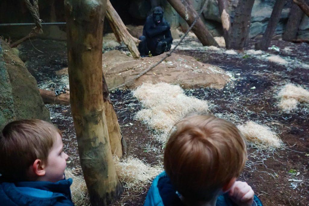 Wer beobachtet wen im  Borgori-Wald