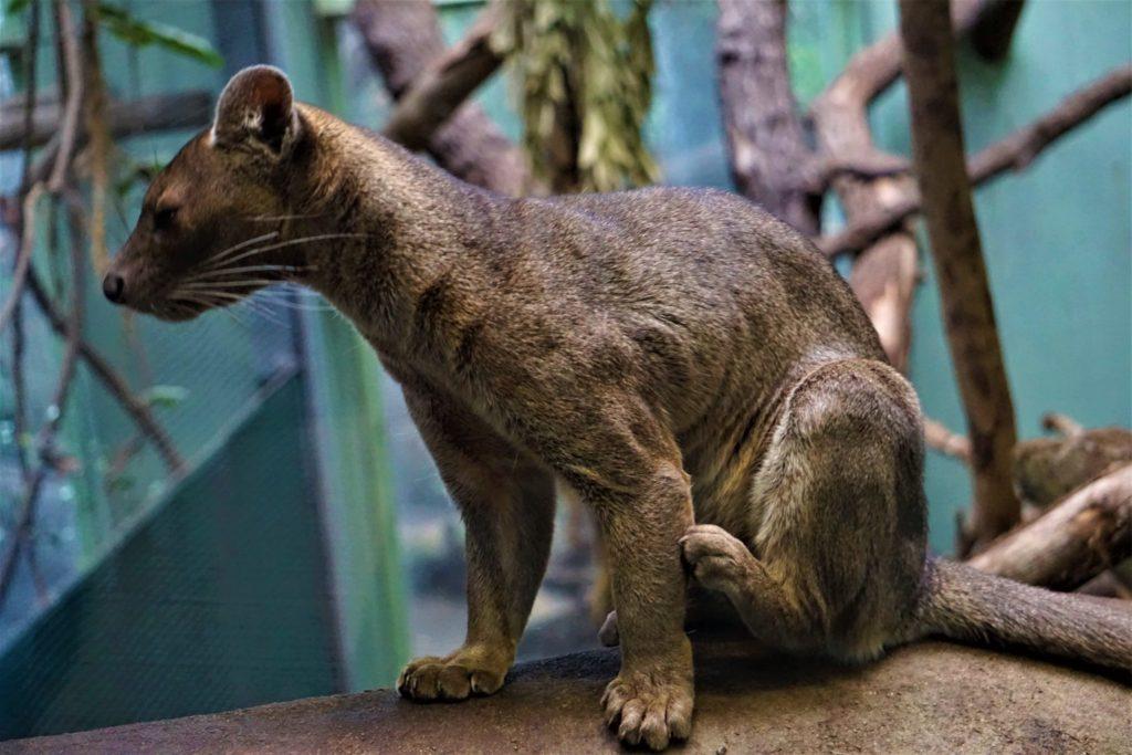 Im Katzendschungel gibt es viel zu entdecken