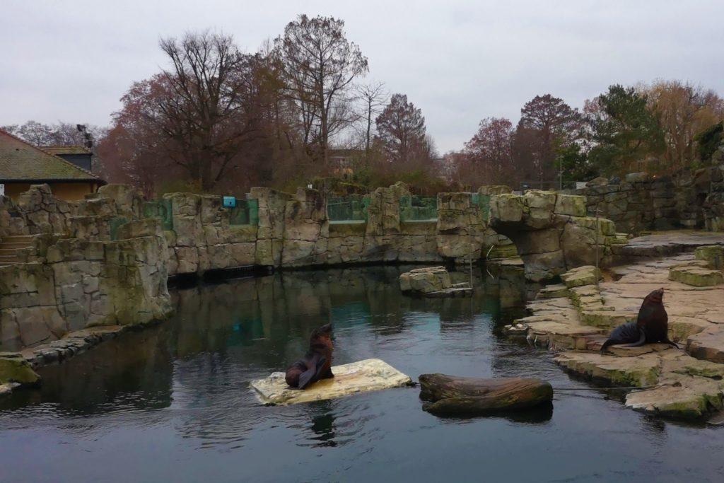 Schaufütterung bei den Robbenklippen