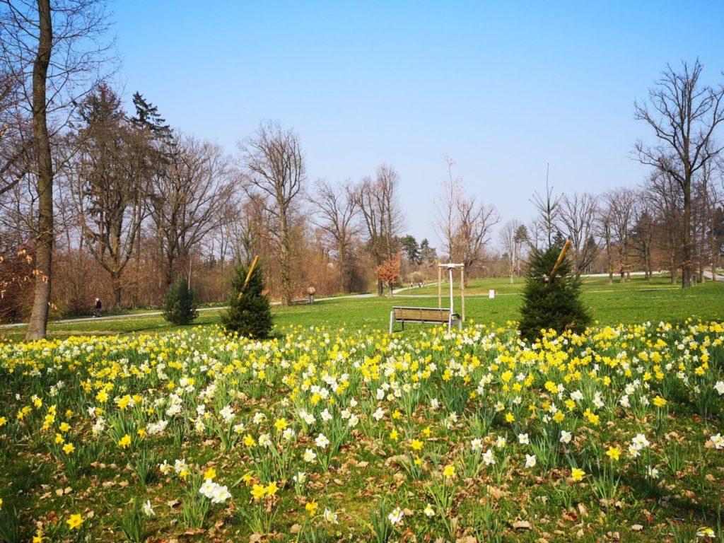 Der wunderschöne frühlingshafte Goldsteinpark in Bad Nauheim