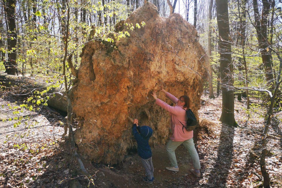 Natur pur erleben auf dem Walderlebnispfad in Wiesabden