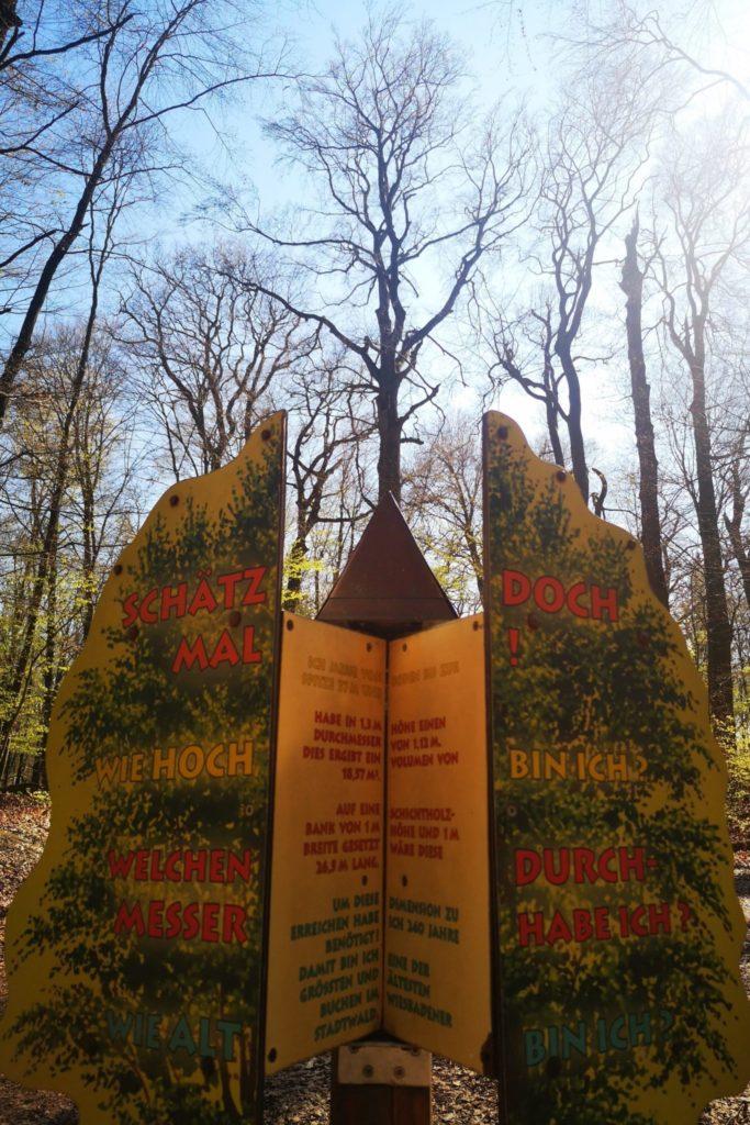 Walderlebnispfad Baumhöhe Wiesabden