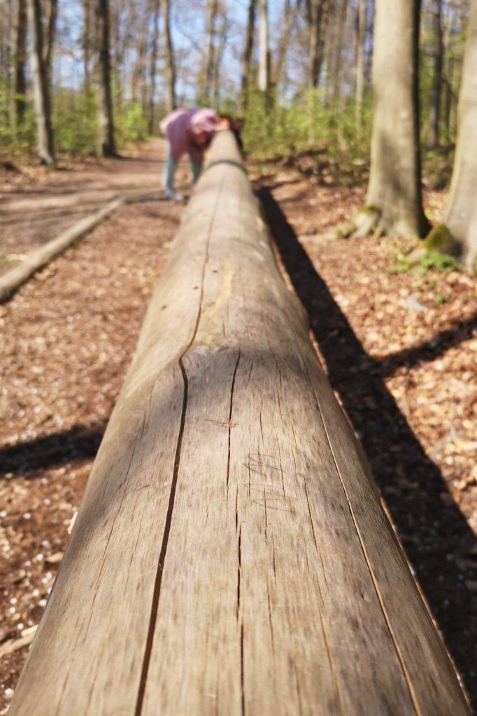 Das Mardertelefon ist das Highlight meiner Kinder beim Walderlebnispfad in Wiesbaden