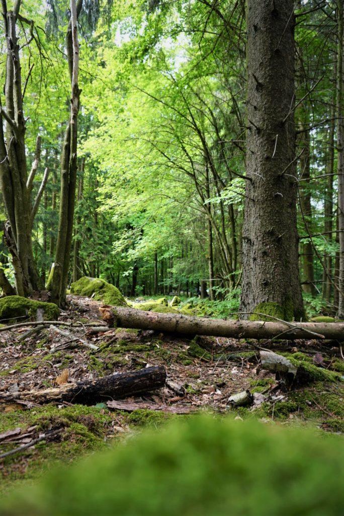 Der Wald am kleinen Felsenmeer