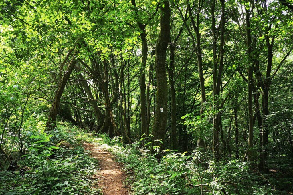 Mystischer Wald in Schotten
