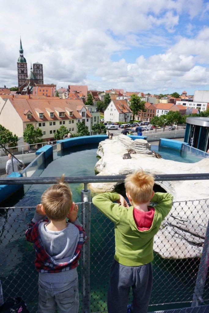 Pinguine im Ozeaneum in Stralsund