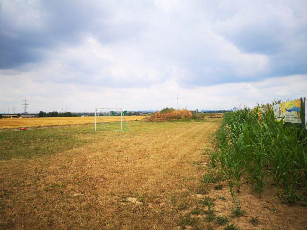 Fußballfeld am Maislabyrinth in Oberursel-Weißkirchen