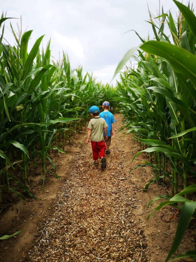 Meine Jungs im Maislabyrinth in Oberursel-Weißkirchen