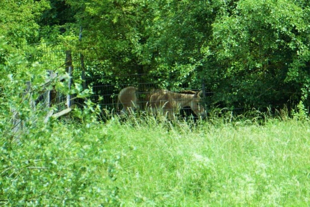 Esel Weilbacher Kiesgruben