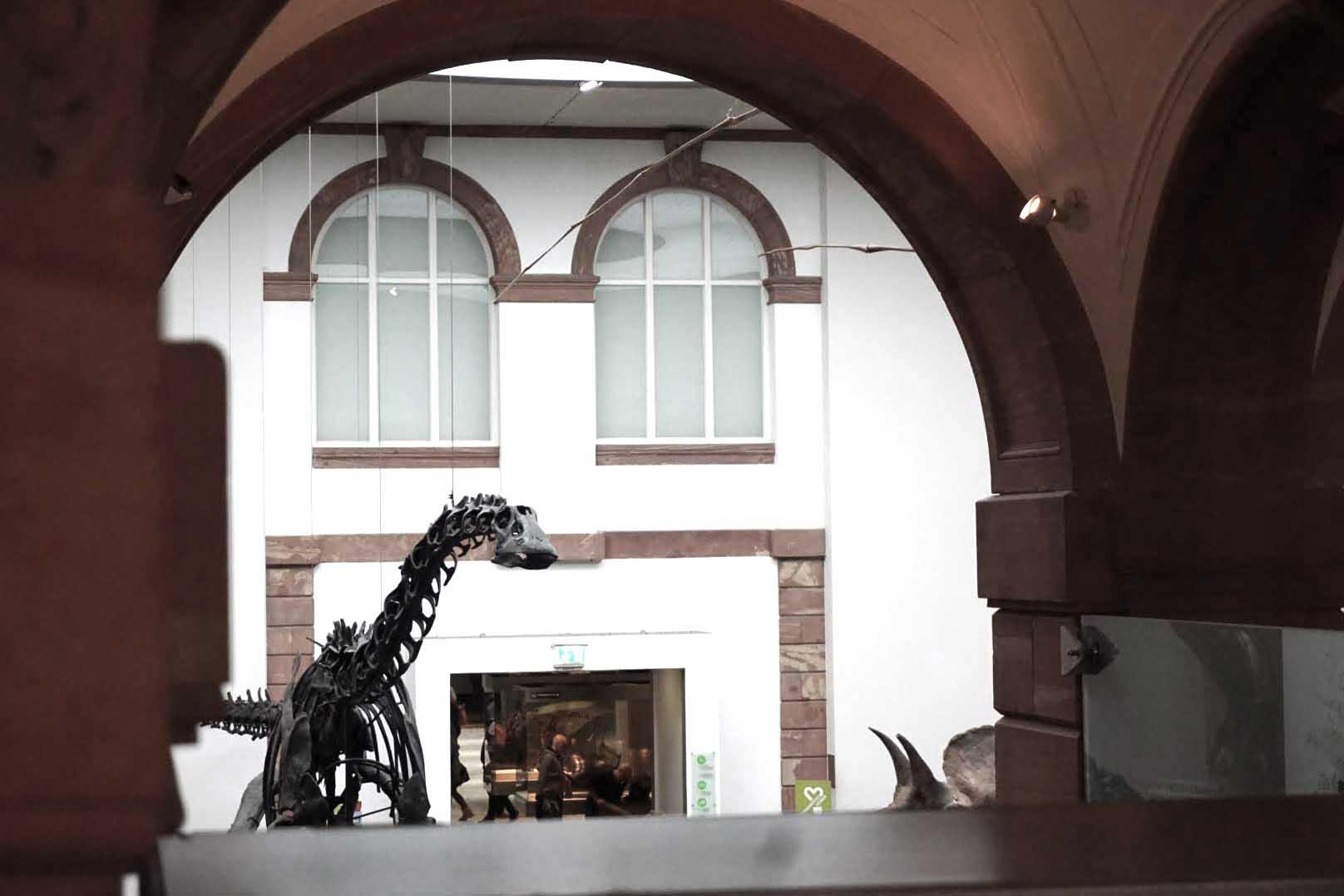 Senckenberg Museum Frankfurt