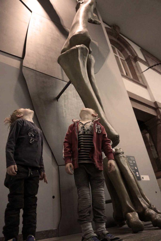 Größenvergleich Senckenberg Museum Frankfurt