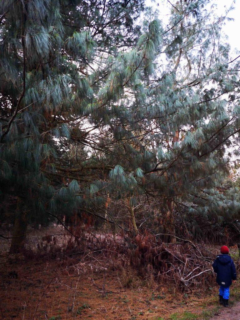 Arboretum Nadelbäume