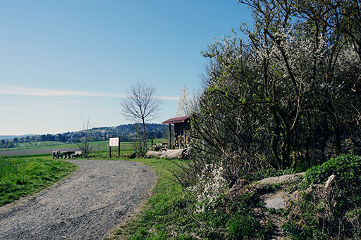 Rast Wald Wildschweinpfad Neu-Anspach
